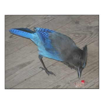 Western Blue Jay Photo Wood Print