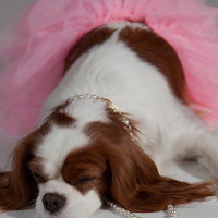 Dog  TUTU Pink and White Pet Photo Prop Fancy Cute Dog Dress