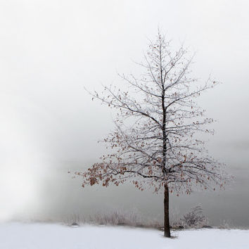 Lone Tree at the Lake Monochromatic Nature Photography