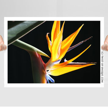 Bird of Paradice Photography/ OPEN EDITION prints / Tropical flower photography and  Colorful plant Photography / Orange, flame, black