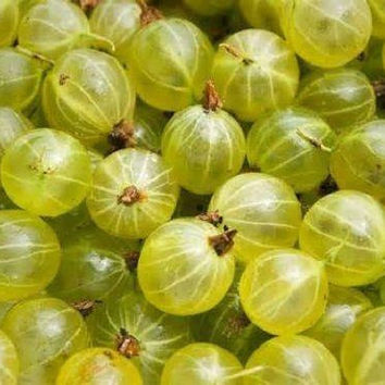 25 Ceylon Gooseberry Fruit Seeds Rare Showy Kids DIY Home Gardening Plant Grow Decor