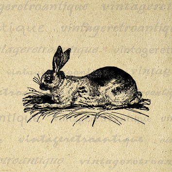 Digital Image Antique Rabbit Graphic Bunny Printable Download Artwork Vintage Clip Art for Transfers Printing etc HQ 300dpi No.2711