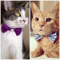 Cute Cat/Dog Bow-Ties Accessories!