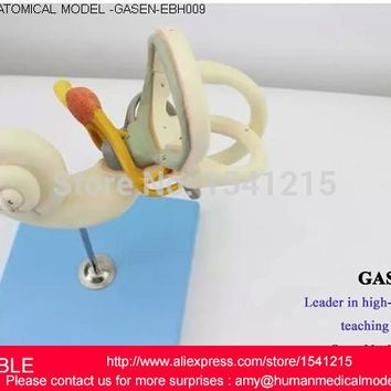INNER EAR LABYRINTH,HUMAN ANATOMICAL MAGNIFY LABYRINTH INNER EAR ANATOMY MEDICAL MODEL SCHOOL HOSPITAL PROFESSIONAL-GASEN-EBH009