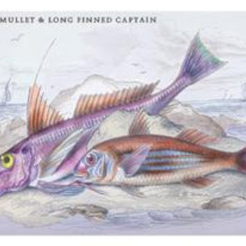 Red Surmullet and LOF Finned Captain: Fine art canvas print (12 x 18)