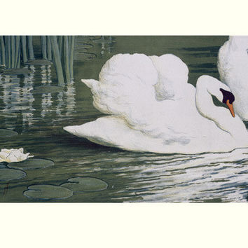 Swan Pond Lake by Muller Fine Art Print