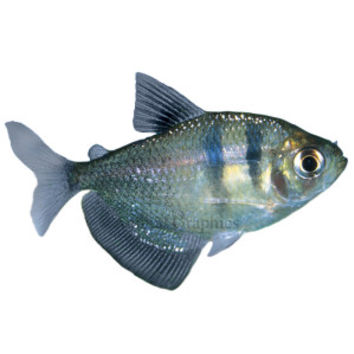 best petsmart fishes products on wanelo