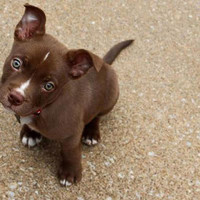 The Cutest Pets on Twitter This Week! - BABY BLUES - Twitter Pics : People.com
