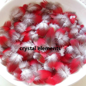 Red Macaw Body Feathers 25+ from Greenwing Parrot Green Wing Bird
