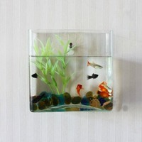 Wall Mount Fishbowl, Square