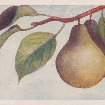 Written on (!) Vintage Postcard (Pear) -- 1960s. Condition 9/10