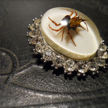 Rhinestone Brooch Spiny Orb Weaver Spider Specimen in Resin Cameo