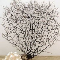Black Sea Fan Beach Decor, number 27