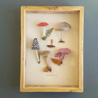 Fungi and Mushroom Collection - Paper sculpture