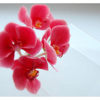 Branch of orchid  Phalaenopsis for wedding by RykhlinskaARTstudio