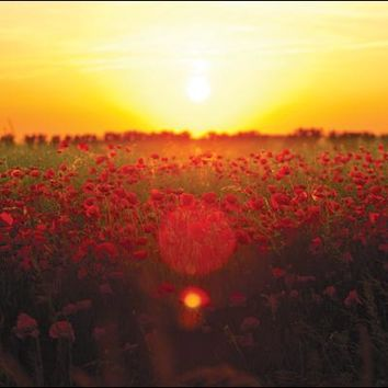 Poppies at Sunset Sympathy Card