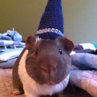 Wizard Guinea Pig Costume Hat - The Magical Guinea Pig Wizards Hat - Guinea Pig Clothing - Guinea Pig Accessories - Guinea Pig Hat
