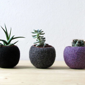 Felt succulent planter collection / Succulent terrarium / The dark side of the moon / felt bowl / winter decor