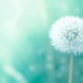 dandelion wall art print botanical photography 8x10 20x30 whimsical dandelion photography bokeh nursery decor bedroom nature teal pastel min