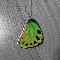 Real Green Birdwing Necklace