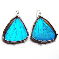 Real Blue Morpho Butterfly Dangle Earrings