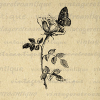 Printable Butterfly and Flower Graphic Download Antique Image Digital for Transfers Tea Towels etc HQ 300dpi No.264