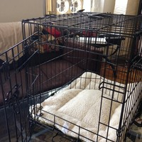 Fold-down Dog Crate and Bed Liner