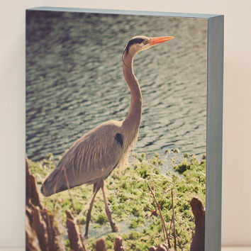 Blue Heron Wall Panel - 8x10 Photo Standout, Bird Wildlife Photograph from Charleston, SC - blue grey green wall art, Ready to Hang