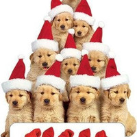 Santa Hat Golden Retriever Puppies Christmas Cards Holiday Greeting Card RetroPlanet.com