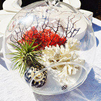 """Black White Red Terrarium with White Coral and Black Sea Fan - Air plant - Sand - Shells - Red Moss - 7"""" Glass Round Globe - Beach Decor"""