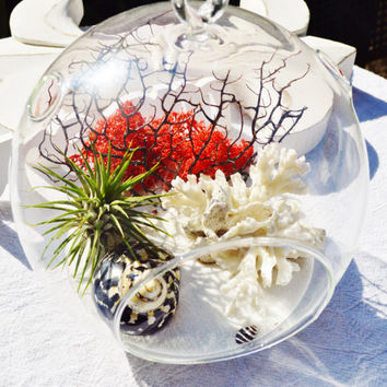 "Black White Red Terrarium with White Coral and Black Sea Fan - Air plant - Sand - Shells - Red Moss - 7"" Glass Round Globe - Beach Decor"