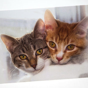 Best Friends Forever, Cat Lover, Photo Greeting Card, Birthday, Anniversary, Friendship, Thank You, Thinking of You, Valentines, Invitation