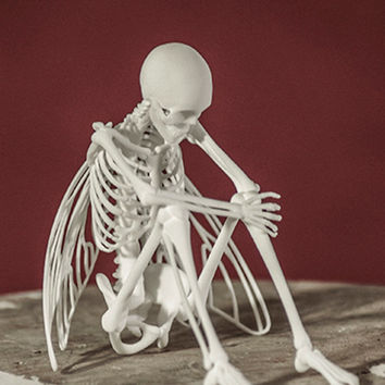 Fairy Skeleton 3D Print Taxidermy