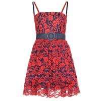 alice + olivia - sia lace coated dress