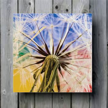 Dandelion Macro Close Up Art Background Photo Panel - Durable Finish - High Definition - High Gloss