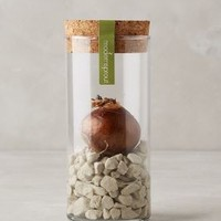 Winter Bulb Kit by Modern Sprout