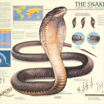 The Snake Reptile Education Poster 27x38