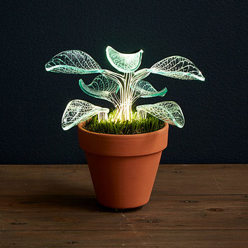 Let it Glow Lamp | bedside lamps, indoor plants
