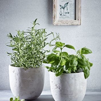 NEW Two Concrete Planters - Indoor Living