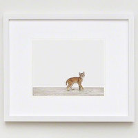 Baby Bobcat | Sharon Montrose | The Animal Print Shop | Baby Animal Photography Prints - The Animal Print Shop by Sharon Montrose