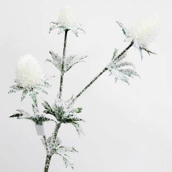 White Thistle Spray Ice Covered