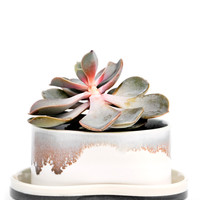 Pinched & Glazed Planter with Tray