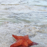 Starfish Art Print, Beach Photography