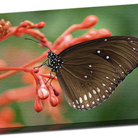 Striped Core (Oleander) Butterfly Mirror Wrapped Canvas