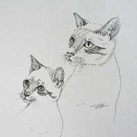 Cat Drawing Original Art Ink Drawing Siamese Kitten Cat Art Black and White Pet Art Cat Illustration 8 x 10