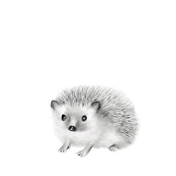 Woodland Nursery Art, Hedgehog, Pencil Drawing, Animal Sketch, Baby Animal Art, Kids Artwork, Nursery Decor, Baby Art, Grey Wall Decor