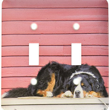 3dRose  lsp_88823_2 Colorado Breckenridge Bernese Mountain Dog Us06 Bja0055 Jaynes Gallery Double Toggle Switch