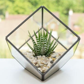 Glass Cube Succulent Terrarium Kit