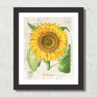 French Sunflower Collage Botanical Canvas Art Print