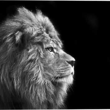 Portrait Of Male Lion Animal Canvas Wall Art Print